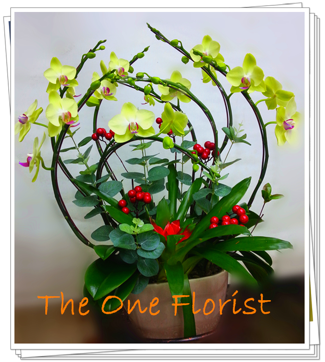 新年年花 蝴蝶蘭8枝裝 網上花店 (KR-A05) 台灣蝴蝶蘭8枝裝連吊飾植物$1288 (2天前訂購,一律免運費) 以上價格於新年期間除外,歡迎查詢訂購 Workshop:24890606 WhatsApp:63861616 www.facebook.com/theoneflorist